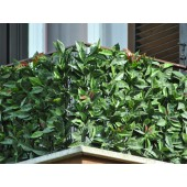 Haie photinia 3D
